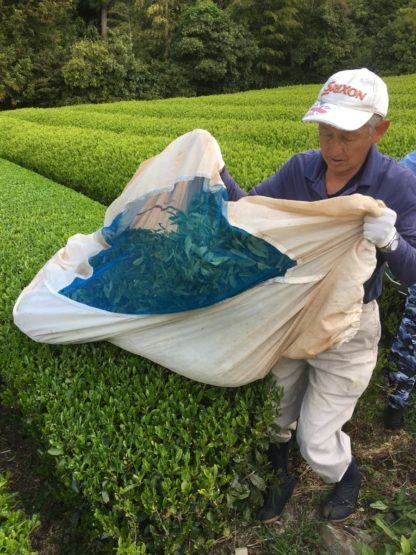 Tea garden in Fujieda
